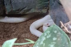 snake_3-scaled