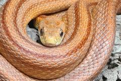 snake_5